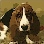 Shame Puppy