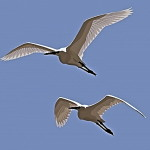 EgretsMentoring